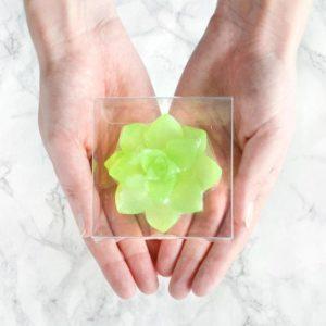 Grønn sukkulentsåpe med sukkulent duft