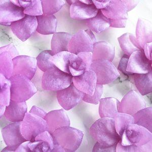 Lilla sukkulentsåpe med gardenia duft